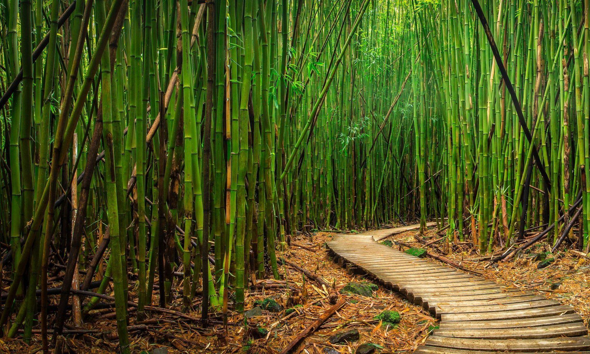 Glücklich wie ein Bambus